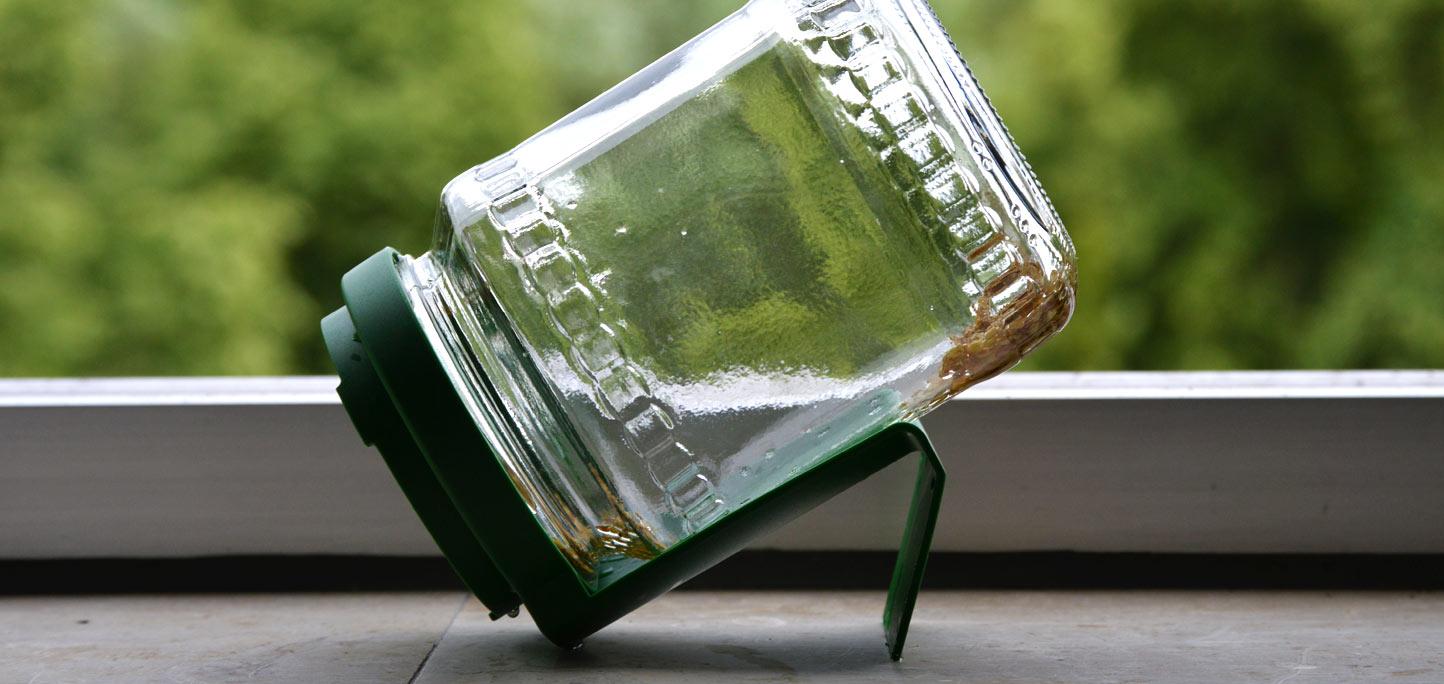 Alfalfa Samen im Keimglas