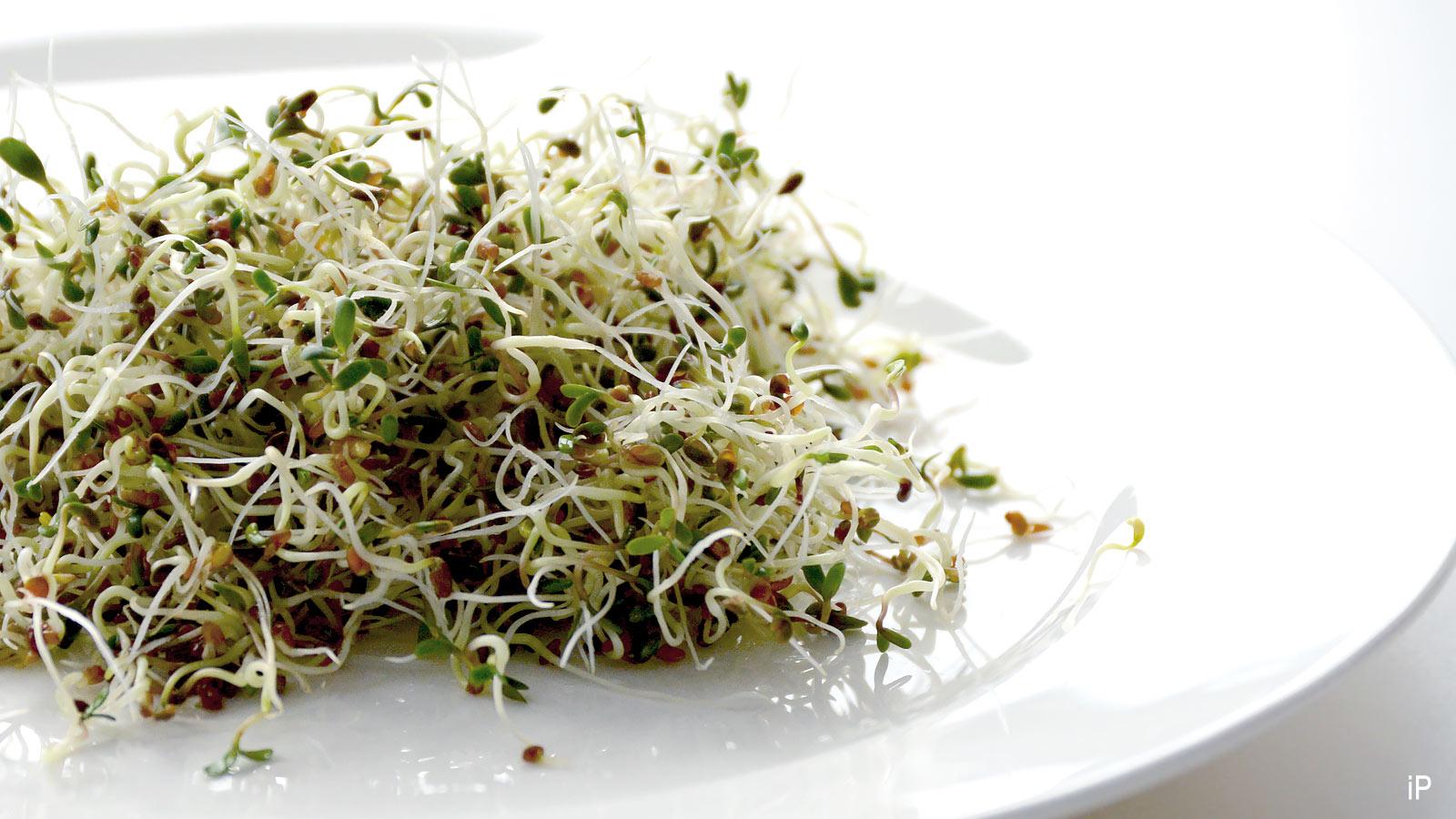 Alfalfa Sprossen